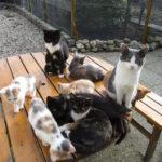 Rundvlees.nu - Kattenfamilie aan tafel